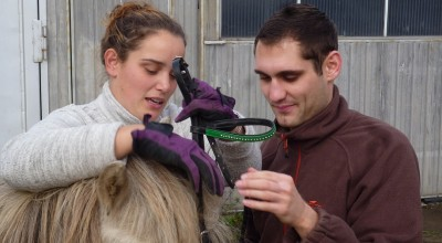 Kurs mit Susanne Salzmann - Tellington TTouch und Centered Riding , Training für Pferd und Reiter