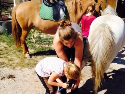 Kurs mit Lisa Kittler – Schöne Pferde durch Training – das besondere Longieren
